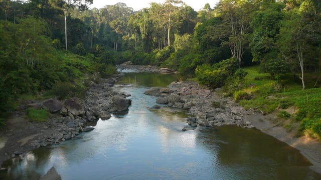 Fluss im Danum