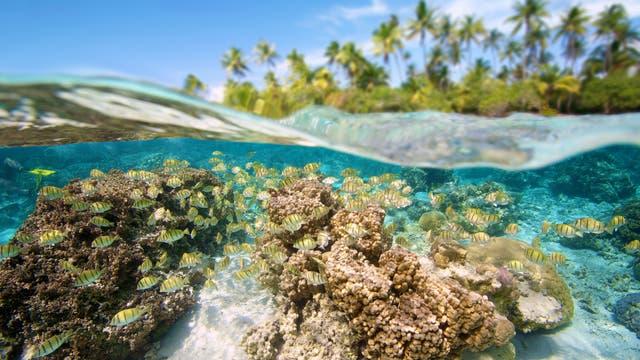 Korallenriff im Südpazifik