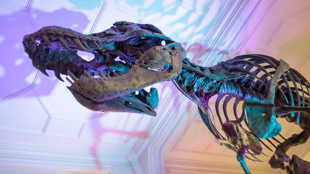 Tyrannosaurus rex Stan
