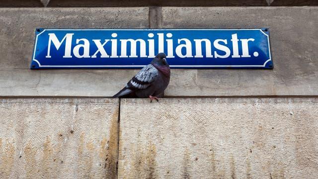 Taube unter einem Straßenschild