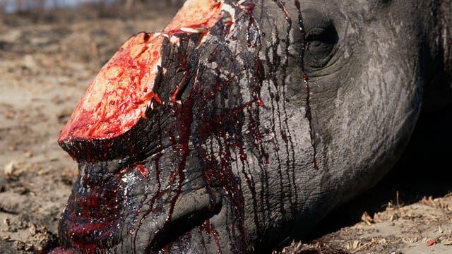 Abgeschlachtetes Nashorn