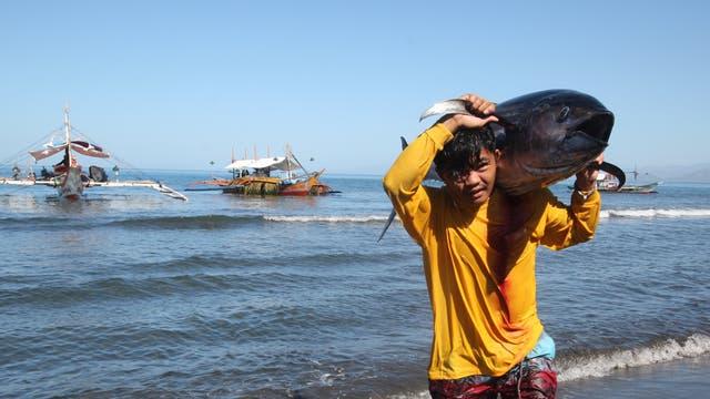 Ein stattlicher Gelbflossenthun auf den Schultern eines philippinischen Fischers