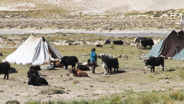 Die heutigen Bewohner Tibets sind auch Nachfahren von Menschen, die schon mitten in der letzten Kaltzeit dort lebten. Damals kam bei diesen Ahnen Erbgut von Neandertalern, Denisovanern und frühen modernen Sibiriern zusammen.