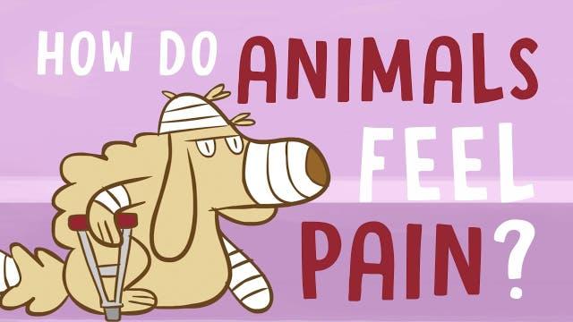 Tierische Schmerzen