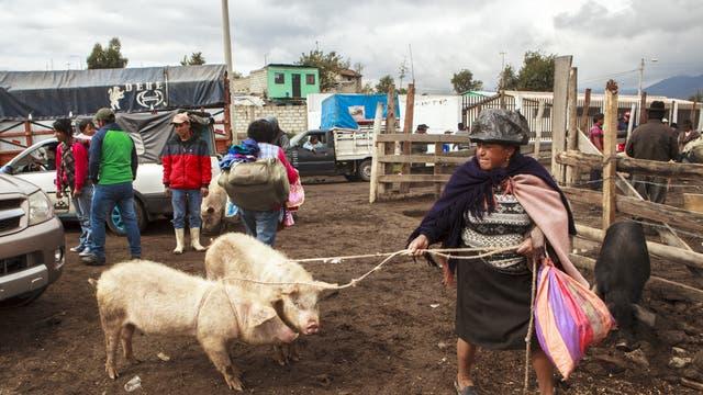 Tiermarkt in Ecuador