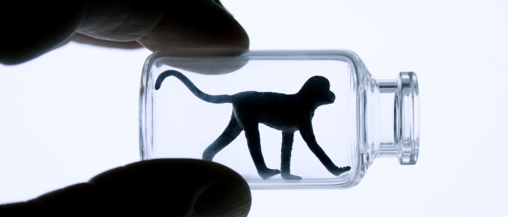 Affenforschung