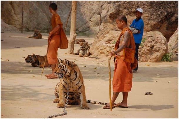 Tigertempel von Kanchanaburi