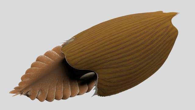 Rekonstruktion von Titanokorys gainesi