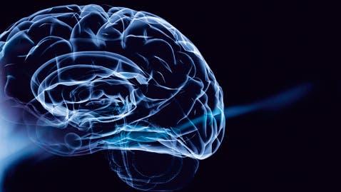 Neuromythen