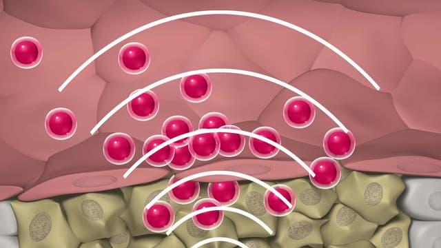 Tumortargeting