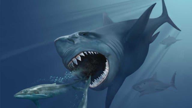 Der prähistorische Riesenhai Megalodon jagt zwei kleinere Bartenwale.