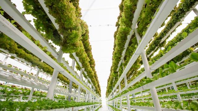 Idee einer vertikalen Farm