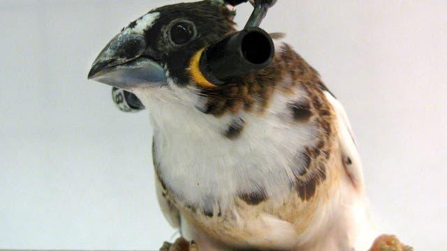 Vogel mit Kopfhörer