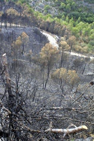 Zerstörter Wald