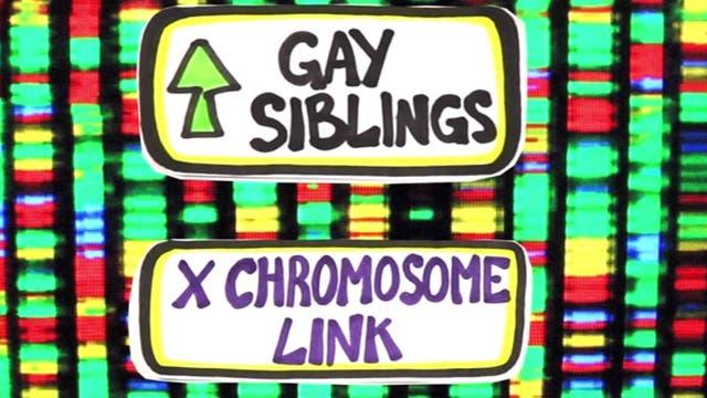 Was haben Gene mit Homosexualität zu tun?