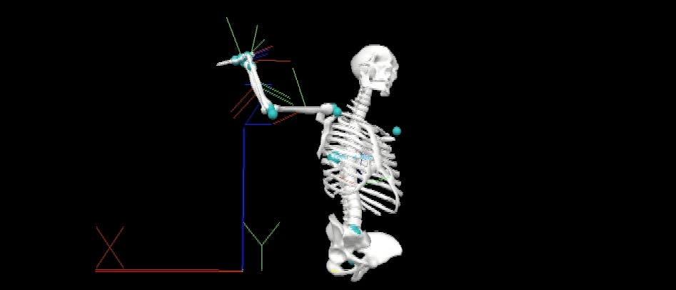 Werfendes Skelett