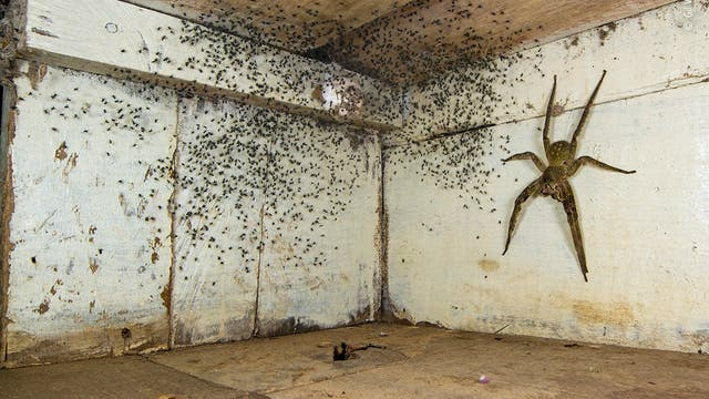 Eine Spinne und ihr Nachwuchs