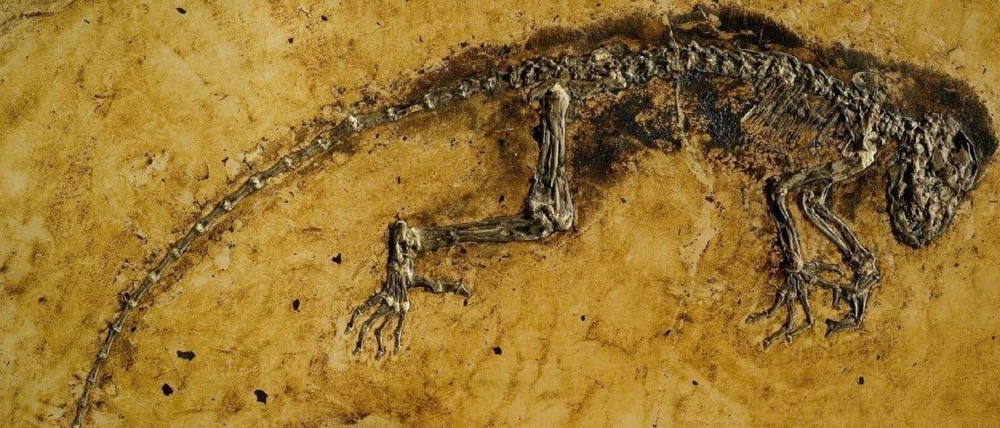 Urzeit-Primate