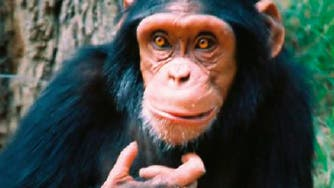 Wie rational sind Affen?