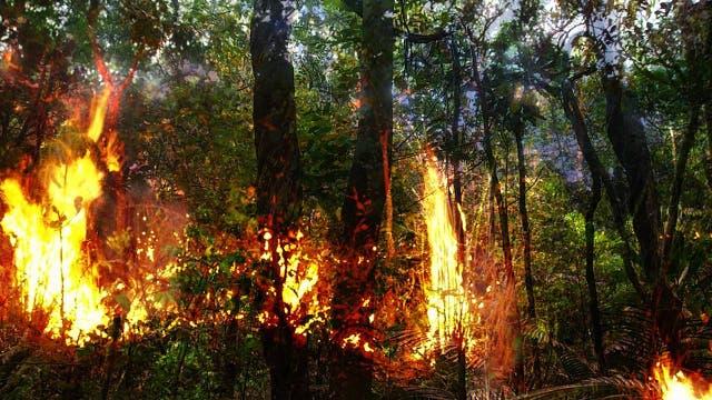 Die Brände haben langfristige Auswirkungen auf den Regenwald