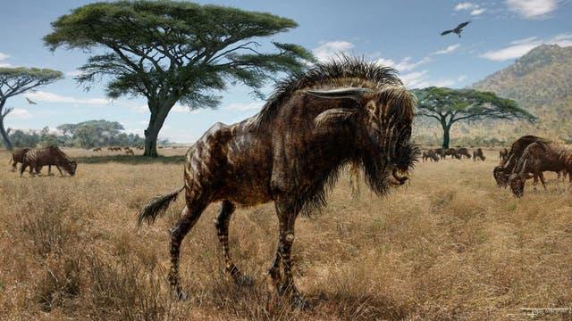 Rusingoryx-Antilope aus Ostafrika