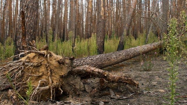 Ein »unaufgeräumter« Wald bietet viele Nischen für Pflanze und Tier