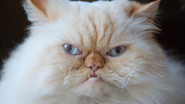 Katze guckt verärgert. Hat ihr das Fressi Fressi nicht geschmeckt?