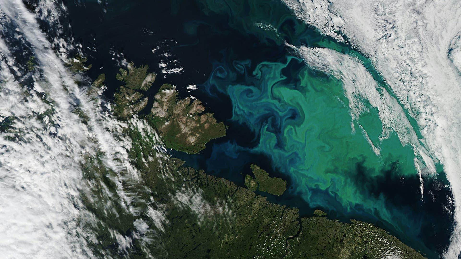 Plankton bedeckt die Barentssee.