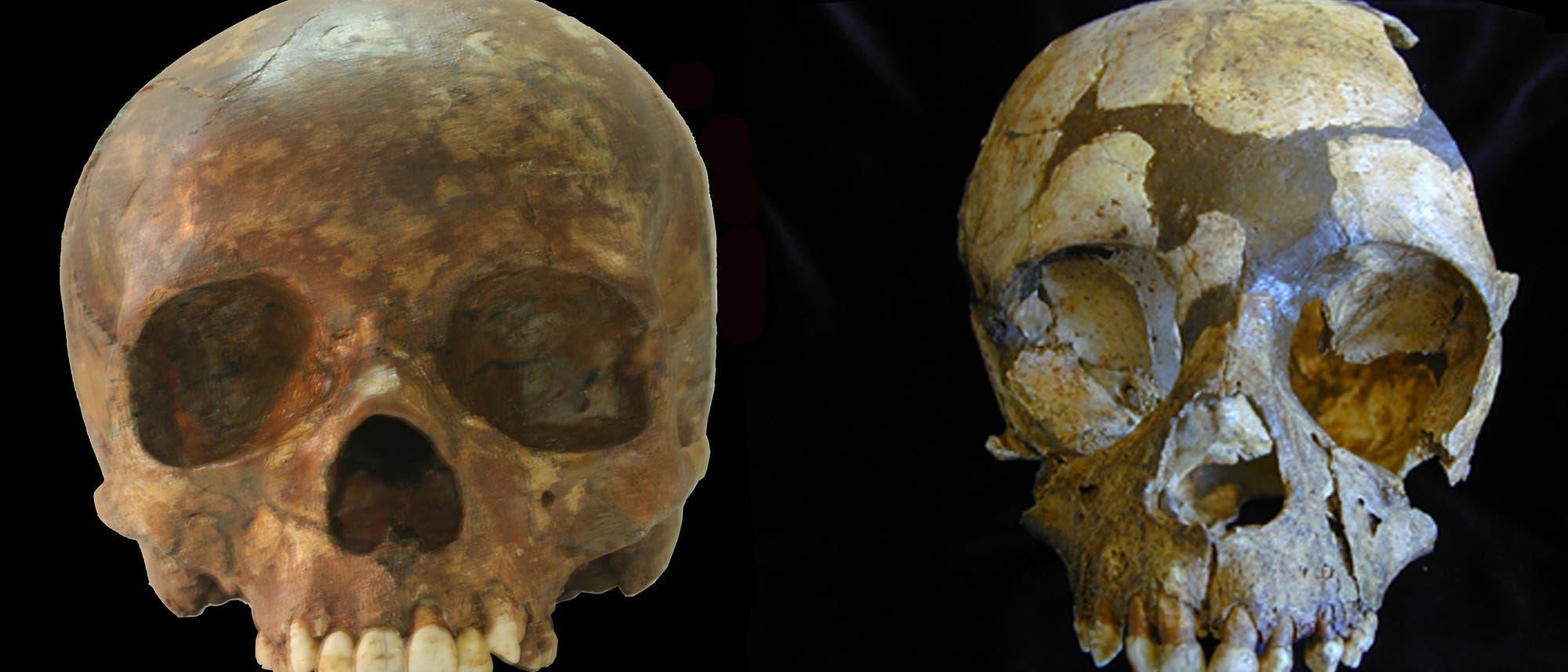 Kinderschädel von Mensch und Neandertaler