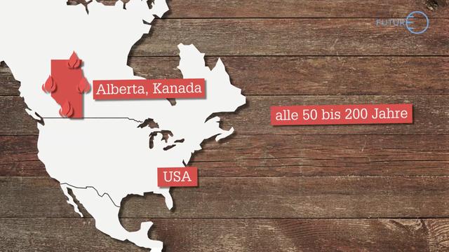 Warum brennen die Wälder Kanadas?