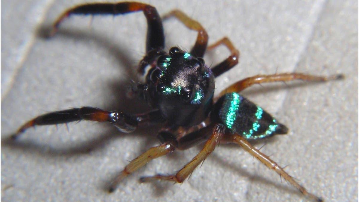 Spinnenparadies