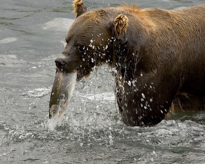 Bärenfest