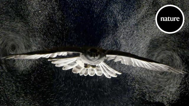 Eine Eule als Vorbild für Aerodynamik