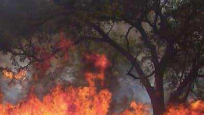 Buschfeuer in Afrika