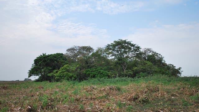 Spuren einer alten Siedlung: eine verdächtige Bauminsel