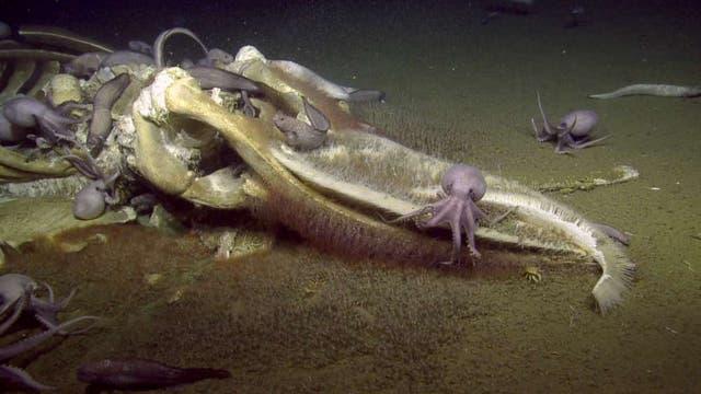 Kraken am Wal