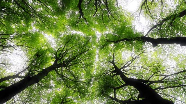 Quiz: 5 Fragen zum Waldbaden