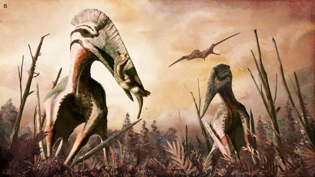Hatzegopteryx erbeutet kleinen Dinosaurier