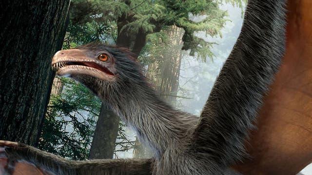 Gleitflügel-Dinosaurier