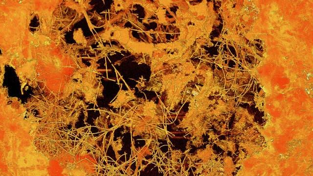 Röntgentomografische Abbildung des fossilen Pilzgeflechts in der etwa 0,8 Millimeter messenden Pore. Die Fossilien sind in Mineralen eingeschlossen, die Jahrmillionen nach der Entstehung des umgebenden Basalts aus zirkulierenden Tiefenwässern auskristallisierten.