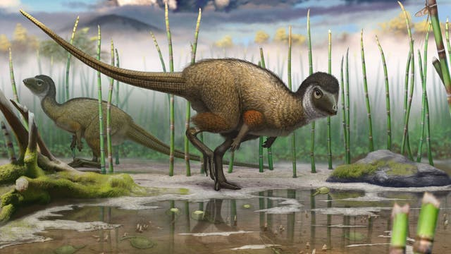 Gefiederter Dino