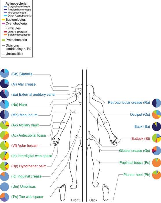 Bakterienwirt Mensch