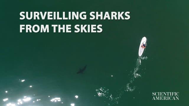 Haie verhalten sich überraschend zurückhaltend
