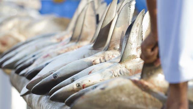 Haie auf dem Fischmarkt