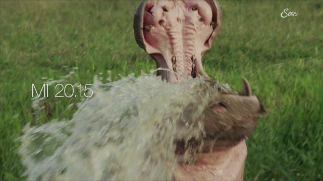 Wie bringt man Escobars Happy Hippos unter Kontrolle?