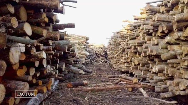 Luftverpester Holzofen