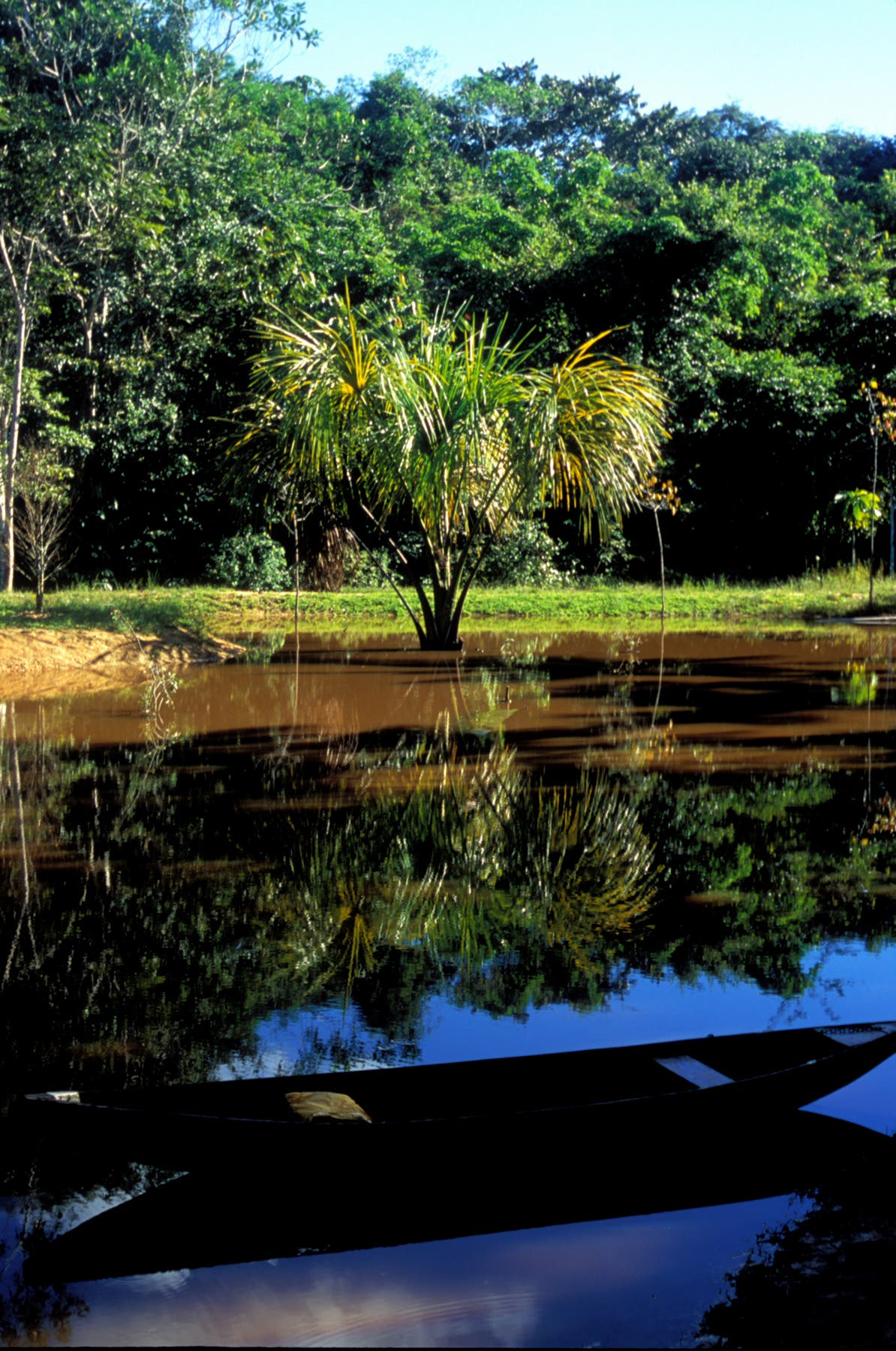 Mauritia-Palme