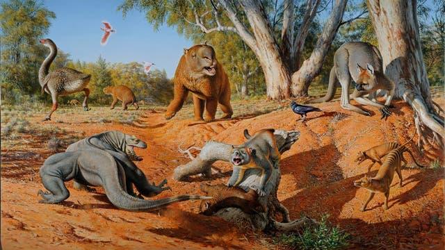 Australiens Megafauna bestand aus riesigen Kängurus, tonnenschweren Wombats, autogroßen Schildkröten und gewaltigem Geflügel