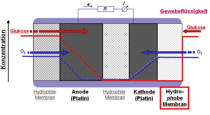 Hydrophobe Membran