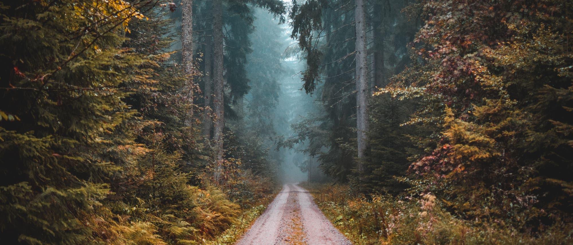 Eine Fahrstraße durch einen dunklen, dichten Wald